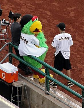 Pirates Mascot named Parrot